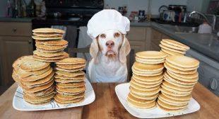 Funny Chef Dog Maymo Makes Pancakes