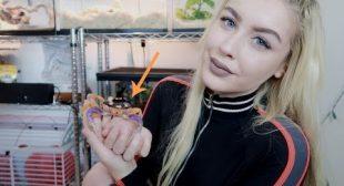I'VE GOT CRABS…As a Pet. (Meet My Halloween Crab)
