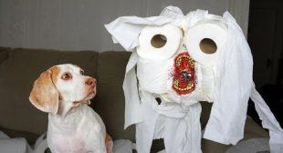 Dog vs Evil Toilet Paper Zombie Prank: Funny Dog Maymo