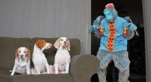 Dogs vs Evil Monkey Prank: Funny Dogs Maymo, Penny & Potpie