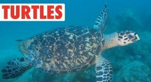 Terrific Turtles Compilation | Shell Bois!