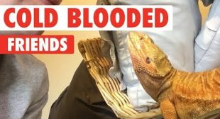 Cold Blooded Friends | Reptiles Compilation