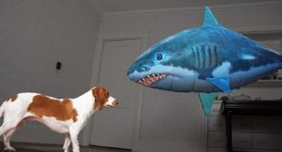 Dog Saves Little Brother from Shark! Funny Dogs Maymo & Potpie
