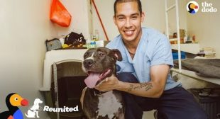 Dog Surprise Reunion with Prisoner Who Saved His Life | The Dodo REUNITED
