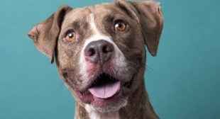 LIVE: Adoptable Dog in New York City – TIBBLE | The Dodo LIVE
