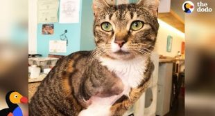 LIVE: Adoptable Three Legged Cat at NYC Cat Cafe | The Dodo LIVE