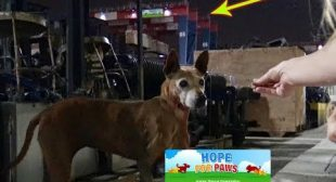 Senior homeless dog living at the port – LOOK at the arrow and see how we ended up on the crane!