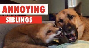 Annoying Siblings