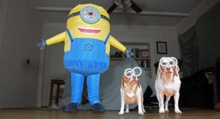 Dogs vs Giant Minion Prank: Funny Dogs Maymo, Penny, & Potpie