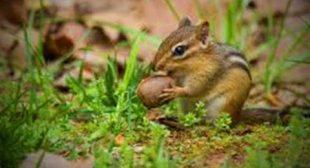 Funny Squirrel 🥜🐿️ Cute Chipmunk (Part 1) [Funny Pets]