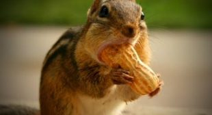 Funny Squirrel 🥜🐿️ Cute Chipmunks (Part 2) [Funny Pets]