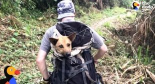 Guys Hike For Hours To Save Dog When Everyone Said It Couldn't Be Done | The Dodo