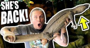 I GOT IT BACK!!! NIGHT NILE MONITOR LIZARD FOR THE REPTILE ZOO!!! | BRIAN BARCZYK