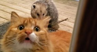 I swear you have NEVER SEEN ANIMALS THAT FUNNY! – It's TIME TO LAUGH!