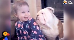 Little Girl And Her Bulldog Are Helping Each Other Grow Up | The Dodo