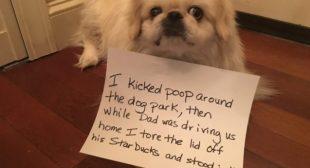 Peking'need a Better Behaved Dog!