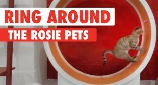 Ring Around The Rosie Pets