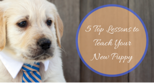 5 Top Lessons to Teach Your New Puppy