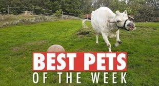 Best Pets of the Week | October 2018 Week 2