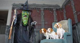 Dogs vs Giant Witch Prank: Funny Dogs Maymo, Penny & Potpie