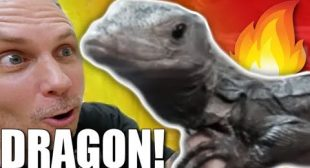 GETTING A NEW BLACK DRAGON FOR MY REPTILE ZOO!! | BRIAN BARCZYK
