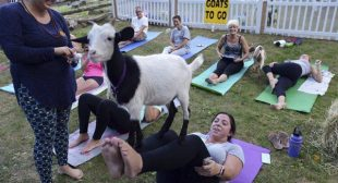 How Sponsoring Goat Yoga Can Help Your Business Grow
