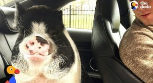 Little Pig Is The Best Son | The Dodo