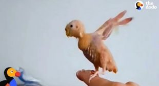 Naked Bird Loves To 'Fly' Around Her Living Room – COCO | The Dodo