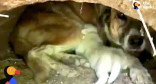 People Rescue Stray Dog And Her Babies From Drainpipe | The Dodo