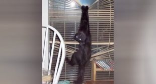BLACK CATS are so HARDCORE – It's TIME FOR YOU to LAUGH!