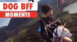 Dog BFF Moments