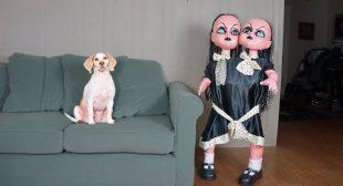 Funny Dogs vs Evil Twins Prank: Funny Dogs Maymo, Penny & Potpie
