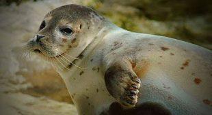 Funny Seals 😹 Funny and Cute Seals (Full) [Funny Pets]