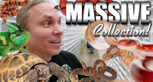 LARGEST REPTILE COLLECTION IN THE WORLD!! THOUSANDS OF SNAKES AND LIZARDS!!! | BRIAN BARCZYK