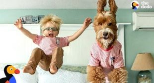 Little Boy And His Dog Became BFFs The Second They Met | The Dodo