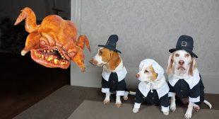 Pilgrim Dogs vs. Turkey Monster Prank! Funny Dogs Maymo, Potpie & Penny