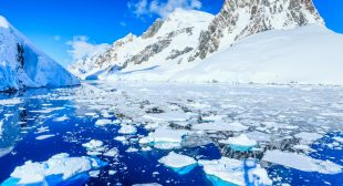 Protecting the Antarctic for penguins, peace and the planet
