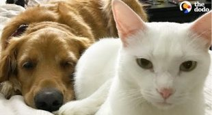 Cat And Dog Have Totally Changed Their Moms' Lives   The Dodo