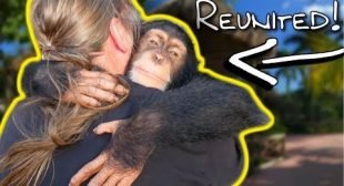 CHIMPANZEE REMEMBERS ME AFTER AN ENTIRE YEAR???   BRIAN BARCZYK