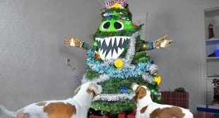 Christmas Tree Monster Pranks Dogs! Funny Dogs Maymo & Potpie