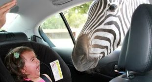 Forget CATS and DOGS! Hilarious KIDS vs ZOO ANIMALS are SO FUNNIER! – You'll DIE LAUGHING!