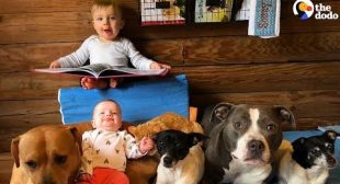 Furry Siblings Help Family Raise Two Babies   The Dodo