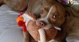 Here's Why You Should Adopt A Senior Dog   The Dodo