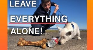 How To Train Your Dog To Leave EVERYTHING Alone — EVERYWHERE!