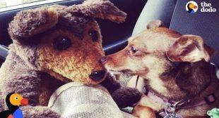 Rescue Dog Inspires Woman To Write a Rescue Dog Musical   The Dodo
