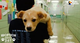Rescue Puppy Brings Her Family So Much Joy | The Dodo Adoption Day