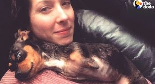 Special Dog Helps Mom Cope With Losing Home – ADEARA   The Dodo