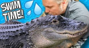 SWIMMING WITH MY HUGE PET ALLIGATOR!!   BRIAN BARCZYK