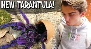 WE GOT A SUPER RARE GIANT PURPLE TARANTULA!!   BRIAN BARCZYK