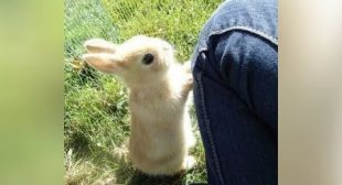 You'll MELT FROM CUTENESS and LAUGH FROM FUNNINESS – Best BABY ANIMAL videos